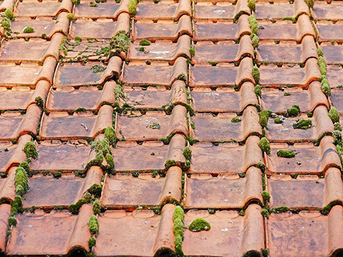 mousse et lichen sur le toit